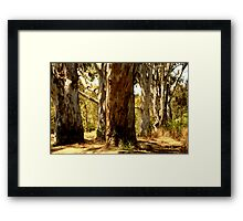 Bush Framed Print