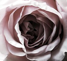 Rose by 123alice1989