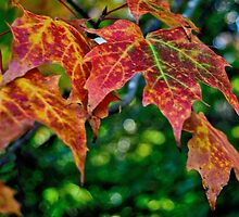 Colors Of The Season by Kathleen   Sartoris