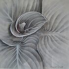 Unfurling Hosta by Philip Holley