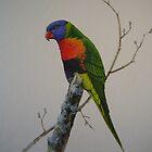 Rainbow lorikeet. by Philip Holley