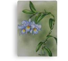 Blue dendrobium orchid Canvas Print