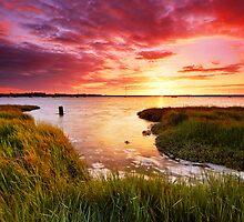 Aldeburgh Wetland 1. by Wayne Bradshaw