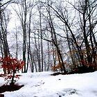 Winter Forest by Kallian