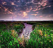 Aldeburgh Wetland 2. by Wayne Bradshaw
