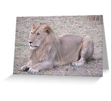 Lion in Masai Mara Greeting Card