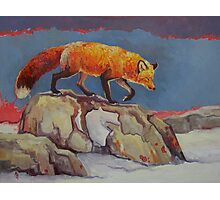 Fox on the Rocks Photographic Print