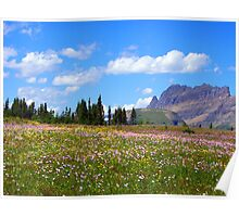 Glacier Wildflowers 8 Poster