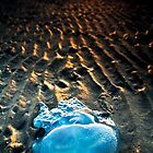 Jelly Star (Nudgee Beach, Queensland) by Matthew Stewart