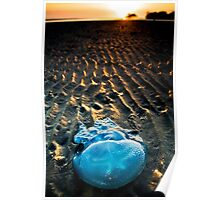 Jelly Star (Nudgee Beach, Queensland) Poster