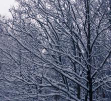 Trees Are Frozen Sticker