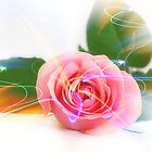 Dreamy Rose by Michelle *