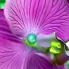 purple orchid by stelfox1