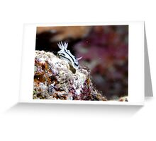 Nudibranch on the Great Barrier Reef - Australia Greeting Card
