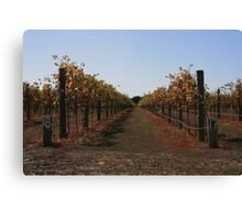 Vineyards in Autumn Canvas Print