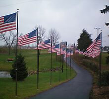 The walk of FLAGS by kodakcameragirl