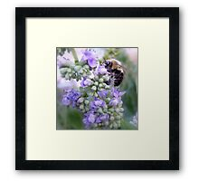Humble Bumble Framed Print