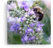 Humble Bumble Canvas Print