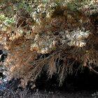 Magical Tree in Croatia......... by Imi Koetz