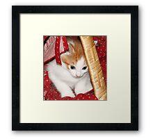 Kitten in a Basket Framed Print