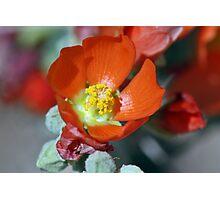 Desert Bloom Photographic Print