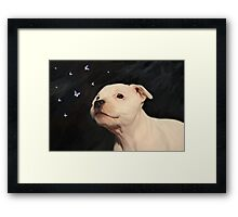 Staffy puppy!! Framed Print