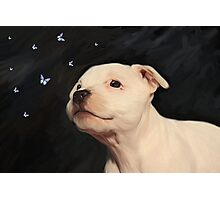 Staffy puppy!! Photographic Print
