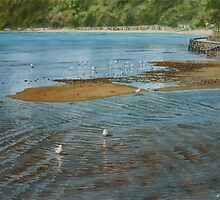 Seagulls at Mills beach, Mornington Peninsular by Freda Surgenor
