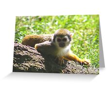 Squirrel monkey.......... Greeting Card