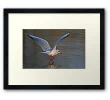 Freezing Feet Framed Print