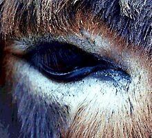 look in my eye by deegarra