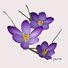 Crocus by Gilberte