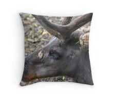 Reindeer....... Throw Pillow