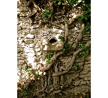 Provence Roots on wall Photographic Print