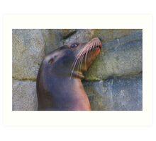 Sea lion portrait Art Print