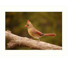 The Cardinal strut Art Print