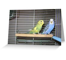 BIRDS-Nature And Beauty Greeting Card