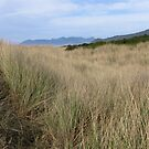 coastal grasslands by Bruce  Dickson
