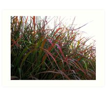 Tall Grass in Fall Art Print