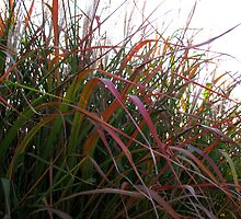 Tall Grass in Fall by Carole Brunet