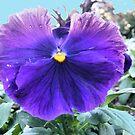 Capital Flower ~ 3 by NancyC