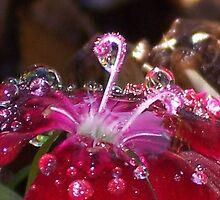 Sparkling Gem by Shaina Lunde