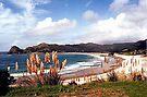 Medlands Beach, Great Barrier Island..........! by Roy  Massicks
