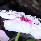 Beaded Beauty by Shaina Lunde