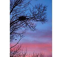 Quiet Nest Photographic Print