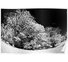 Infrared Trees Fisheye Poster