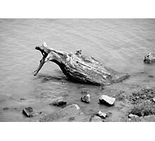 SF Bay Deadwood  Photographic Print