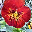 Capital Flower ~ 4 by NancyC