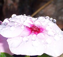 Pillow Top Droplets by Shaina Lunde