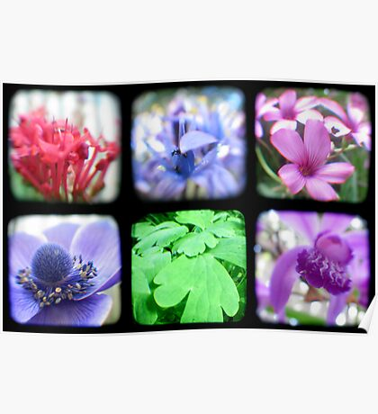 My Garden Through the Viewfinder Poster